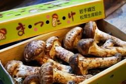 2012年松茸.jpg