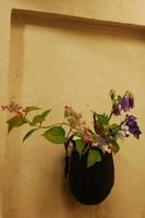 山紫陽花.JPG
