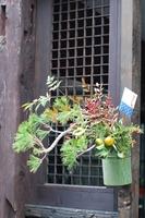 玄関正月花.JPG