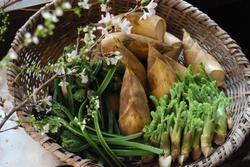 筍・山菜1.jpg
